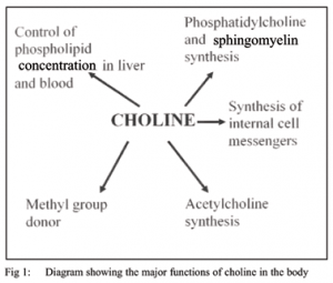 choline functions for cholinergic biohacker